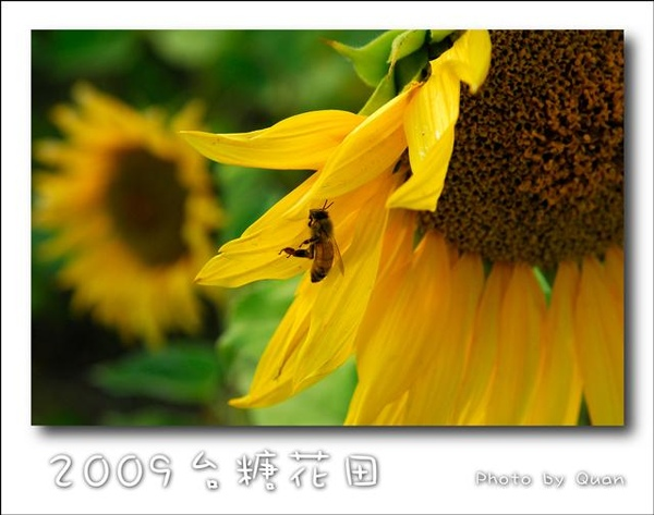 2009台糖花田0039.jpg
