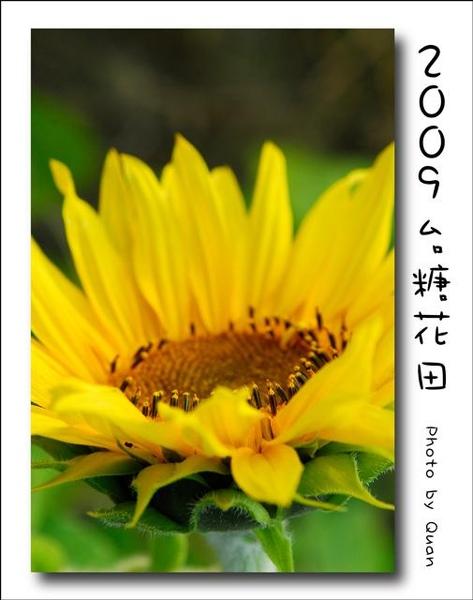 2009台糖花田0040.jpg
