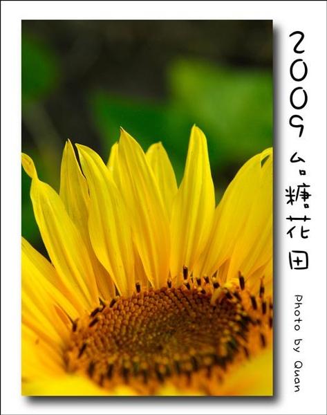 2009台糖花田0043.jpg