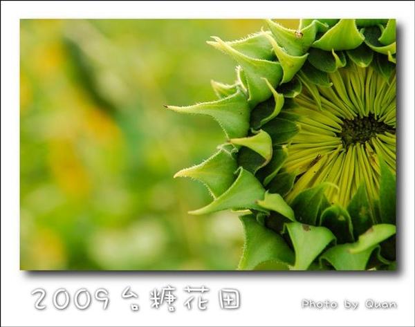 2009台糖花田0047.jpg