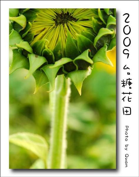 2009台糖花田0048.jpg