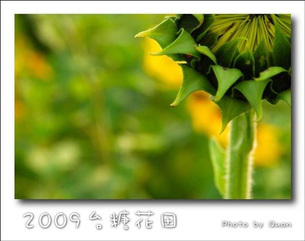 2009台糖花田0049.jpg