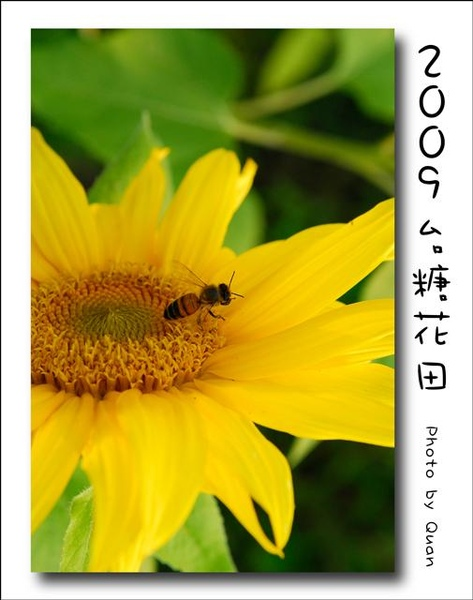 2009台糖花田0050.jpg