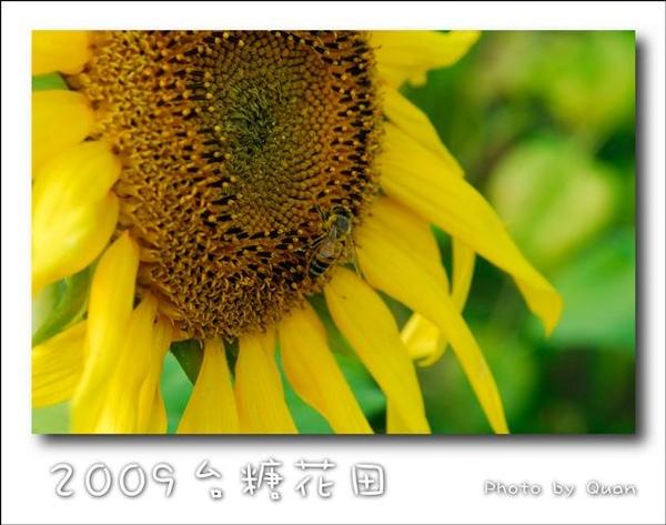 2009台糖花田0054.jpg
