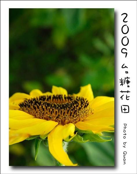 2009台糖花田0057.jpg