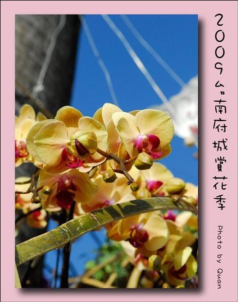 2009台南府城賞花季0002.jpg