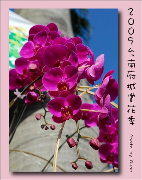 2009台南府城賞花季0003.jpg