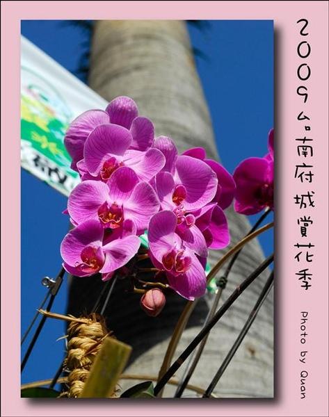 2009台南府城賞花季0004.jpg