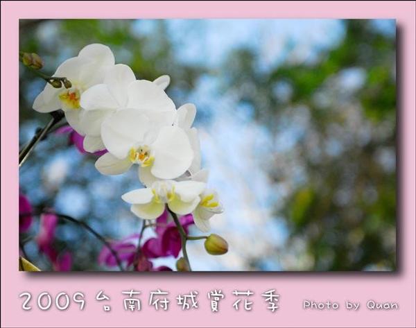 2009台南府城賞花季0008.jpg