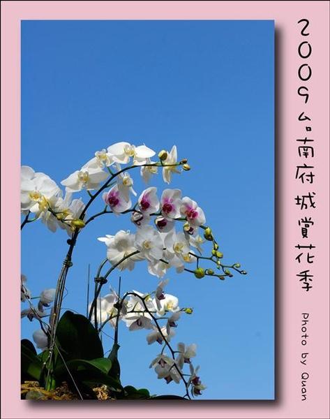 2009台南府城賞花季0014.jpg