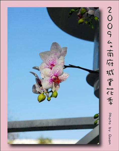 2009台南府城賞花季0016.jpg