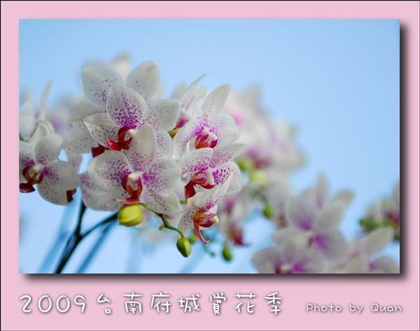 2009台南府城賞花季0019.jpg