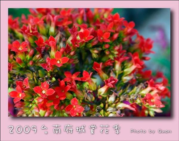 2009台南府城賞花季0022.jpg