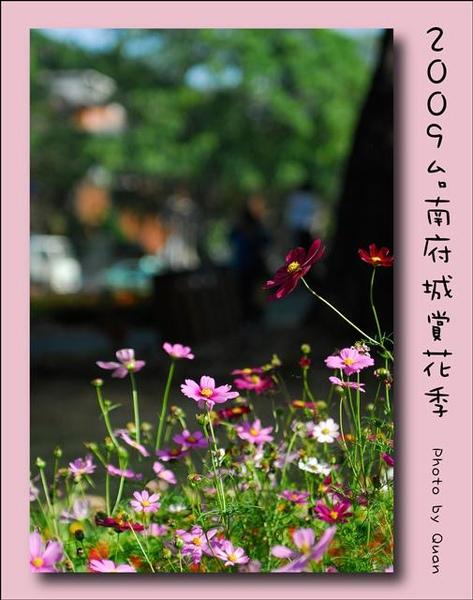 2009台南府城賞花季0027.jpg