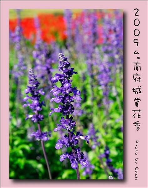 2009台南府城賞花季0029.jpg