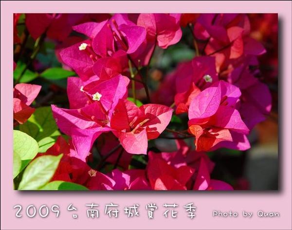 2009台南府城賞花季0034.jpg