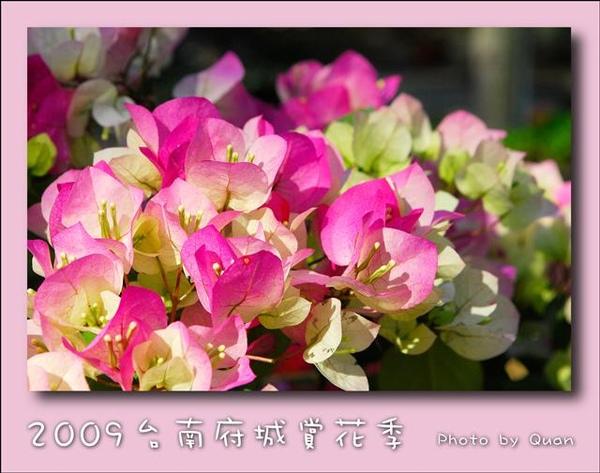 2009台南府城賞花季0036.jpg