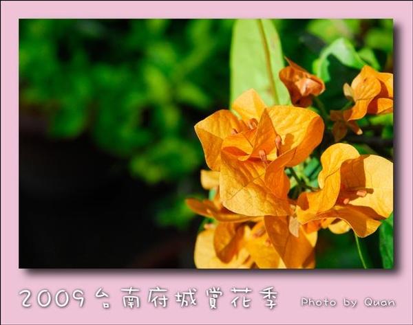 2009台南府城賞花季0040.jpg