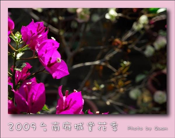 2009台南府城賞花季0043.jpg