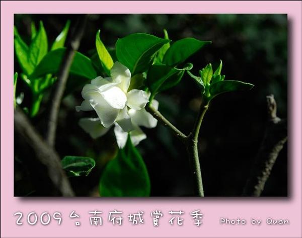2009台南府城賞花季0047.jpg