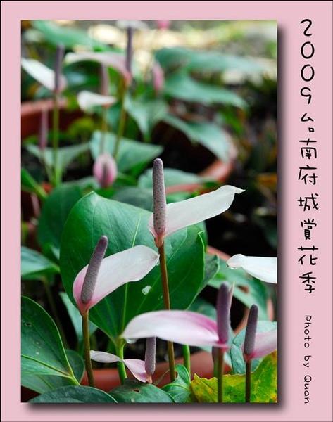 2009台南府城賞花季0048.jpg