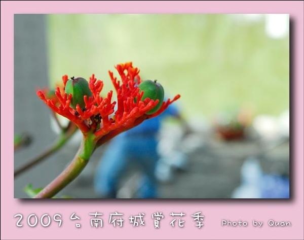 2009台南府城賞花季0050.jpg