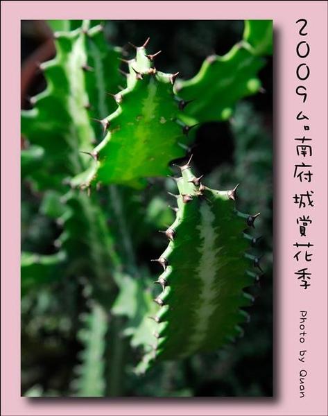 2009台南府城賞花季0053.jpg