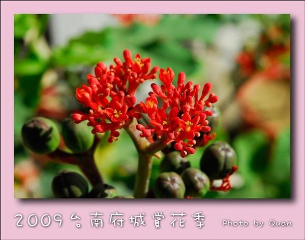 2009台南府城賞花季0055.jpg