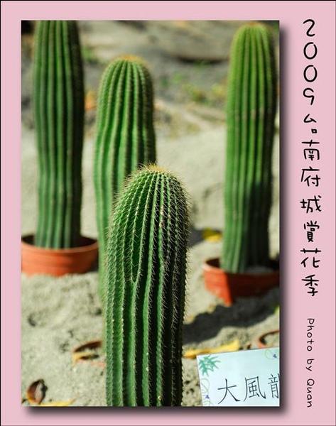 2009台南府城賞花季0056.jpg