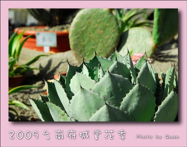 2009台南府城賞花季0057.jpg
