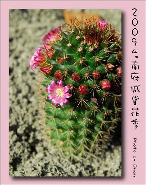 2009台南府城賞花季0058.jpg