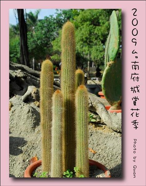 2009台南府城賞花季0060.jpg