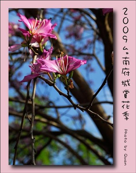 2009台南府城賞花季0063.jpg