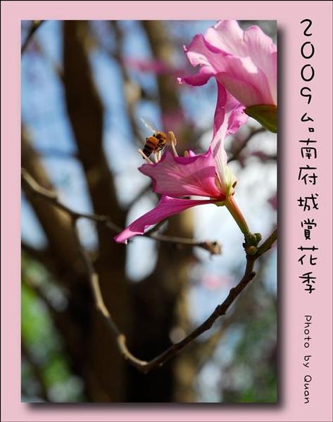 2009台南府城賞花季0064.jpg