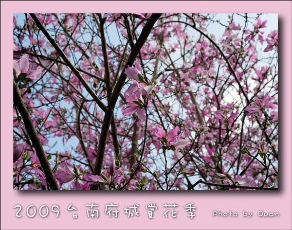 2009台南府城賞花季0066.jpg