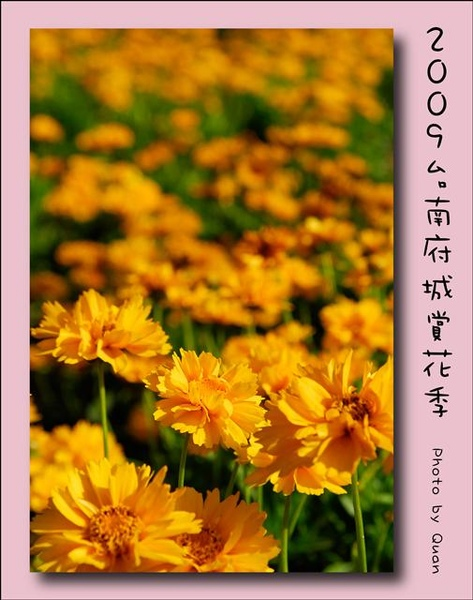 2009台南府城賞花季0068.jpg
