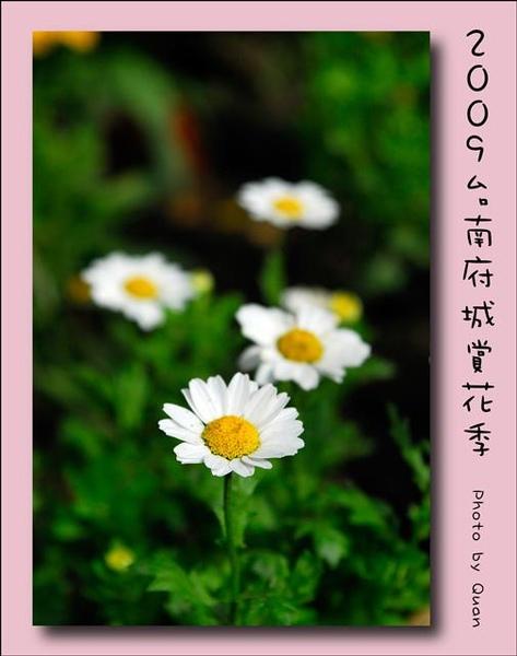 2009台南府城賞花季0072.jpg
