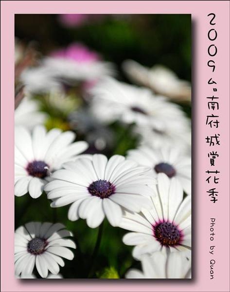 2009台南府城賞花季0074.jpg