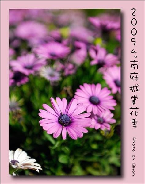 2009台南府城賞花季0077.jpg