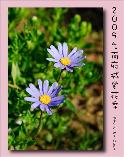 2009台南府城賞花季0081.jpg
