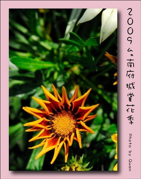 2009台南府城賞花季0085.jpg