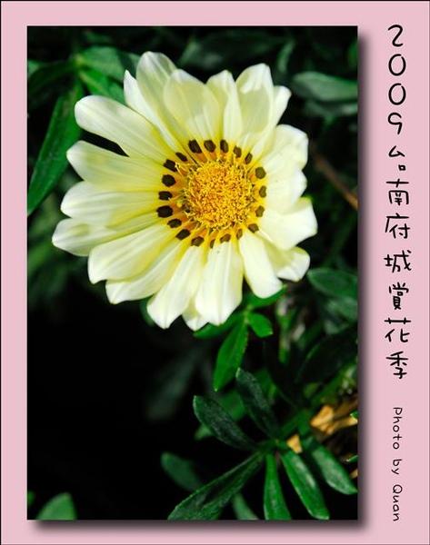 2009台南府城賞花季0087.jpg