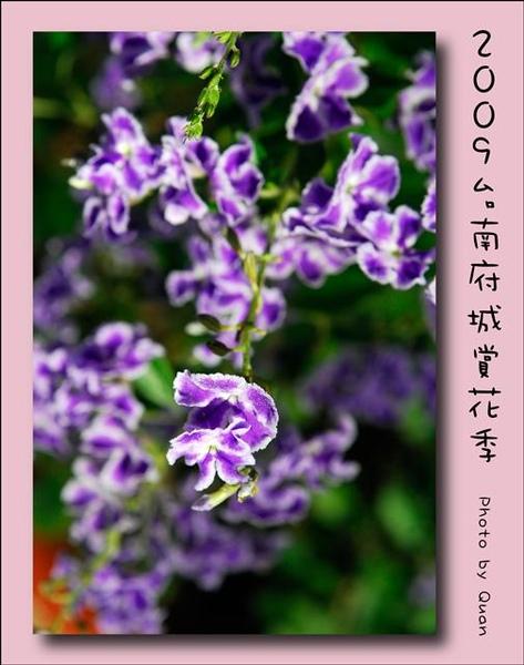 2009台南府城賞花季0091.jpg
