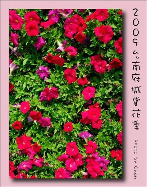 2009台南府城賞花季0097.jpg