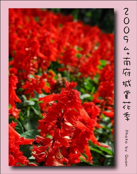 2009台南府城賞花季0099.jpg