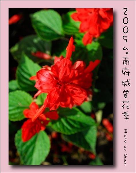2009台南府城賞花季0100.jpg