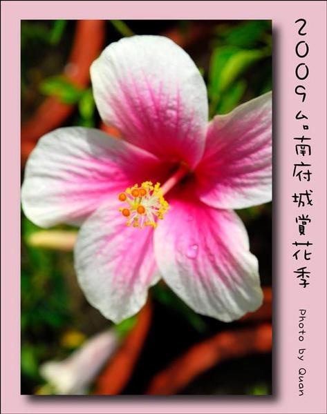 2009台南府城賞花季0103.jpg