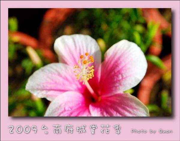 2009台南府城賞花季0104.jpg