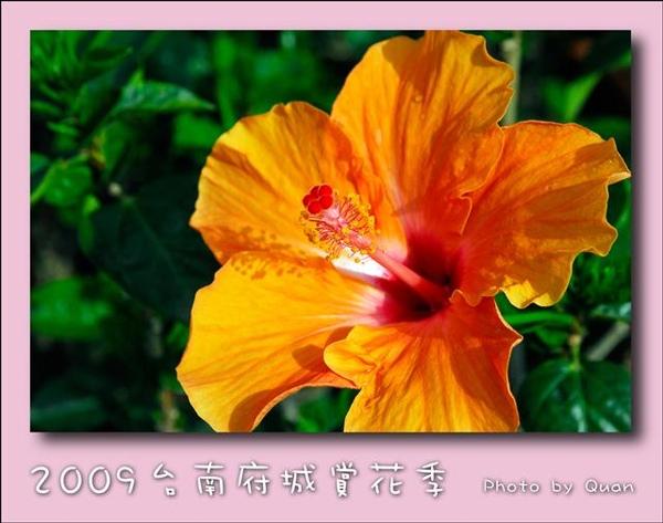 2009台南府城賞花季0108.jpg
