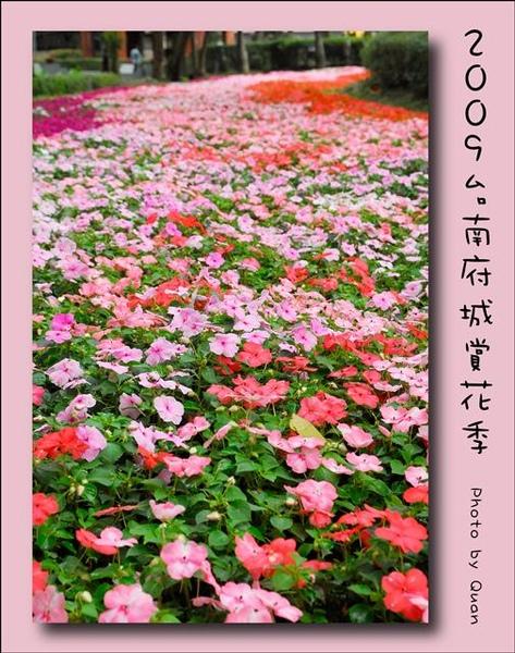 2009台南府城賞花季0110.jpg